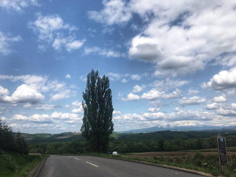 Driving in Panorama Road