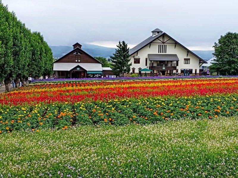 Farm Tomita Hokkaido Self Drive Itinerary