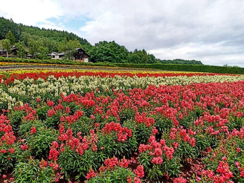 Hokkaido Self Drive Travel Blog