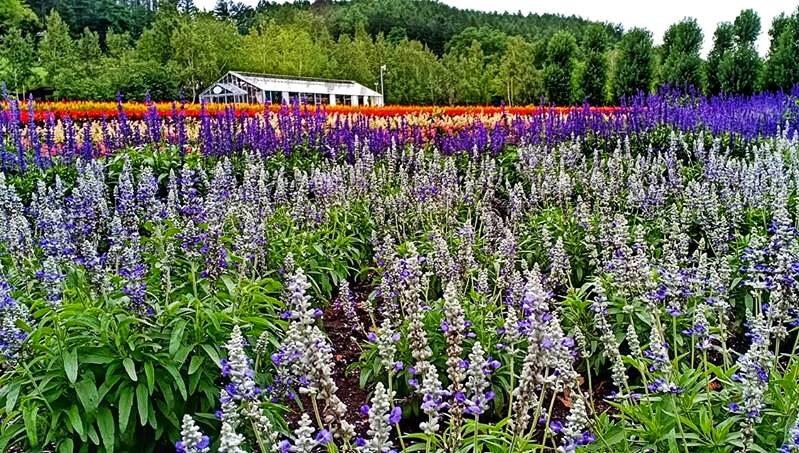 Planning on Hokkaido Self Drive Itinerary